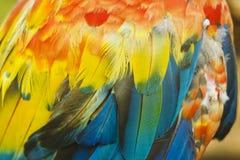 Μακροεντολή του χρωματισμένου φτερού ara παπαγάλων Στοκ φωτογραφία με δικαίωμα ελεύθερης χρήσης