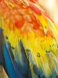 Μακροεντολή του χρωματισμένου φτερού ara παπαγάλων Στοκ Φωτογραφίες