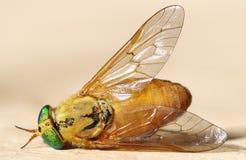 Μακροεντολή των κίτρινων μυγών Στοκ φωτογραφία με δικαίωμα ελεύθερης χρήσης