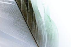 Μακροεντολή φτερών Στοκ φωτογραφίες με δικαίωμα ελεύθερης χρήσης