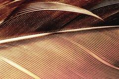 Μακροεντολή φτερών Στοκ φωτογραφία με δικαίωμα ελεύθερης χρήσης