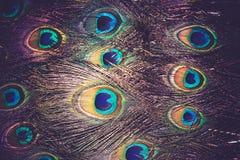Μακροεντολή φτερών Peacock αναδρομική Στοκ Φωτογραφίες