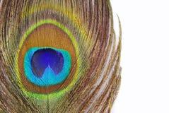 Μακροεντολή φτερών Peacock Στοκ φωτογραφία με δικαίωμα ελεύθερης χρήσης