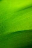 Μακροεντολή φύλλων μπανανών Στοκ εικόνες με δικαίωμα ελεύθερης χρήσης
