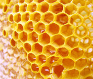 Μακροεντολή hineycomb με το μέλι Στοκ φωτογραφία με δικαίωμα ελεύθερης χρήσης