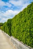 Μακροχρόνια πράσινη σειρά φρακτών στο πεζούλι εδάφους κατά μήκος του συγκεκριμένου πεζοδρομίου στο νεφελώδες υπόβαθρο ουρανού Στοκ Εικόνες