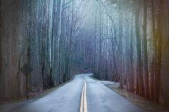 Μακροχρόνια φωτογραφία οδών στα βαθιά ξύλα με τις ζωηρόχρωμες ακτίνες του φωτός ηλιοφάνειας Στοκ εικόνες με δικαίωμα ελεύθερης χρήσης