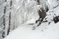 Μακροχρόνιος περίπατος μέσω του χειμερινού κωνοφόρου δάσους στοκ φωτογραφίες