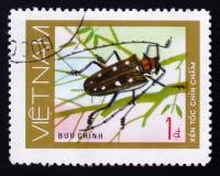 μακροχρόνιο ζωύφιο κανθάρων κέρατων εντόμων, πηγούνι Xin toc cham Στοκ εικόνες με δικαίωμα ελεύθερης χρήσης