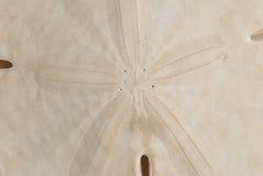 μακρο άμμος δολαρίων λεπ Στοκ φωτογραφία με δικαίωμα ελεύθερης χρήσης