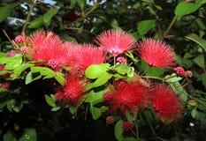 Μακρο άνθιση λουλουδιών στοκ εικόνες με δικαίωμα ελεύθερης χρήσης