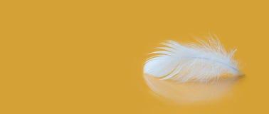Μακρο άποψη σύστασης φτερών χνουδωτή άσπρη Έννοια μαλακότητας πολυτέλειας Feathering φτερώματος πουλιών στο κίτρινο υπόβαθρο ρηχό Στοκ Εικόνα