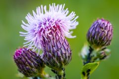 Μακρο άποψη του ανθίζοντας λουλουδιού με τις σπονδυλικές στήλες Στοκ φωτογραφία με δικαίωμα ελεύθερης χρήσης