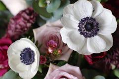 μακρο άσπρο λουλούδι anemones Στοκ εικόνα με δικαίωμα ελεύθερης χρήσης