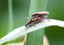 Μακρο έντομο Στοκ εικόνα με δικαίωμα ελεύθερης χρήσης