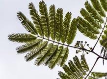 μακρο δέντρο φύλλων ανασκόπησης πράσινο Στοκ φωτογραφίες με δικαίωμα ελεύθερης χρήσης