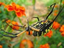 μακρο αράχνη κήπων κίτρινη στοκ φωτογραφία