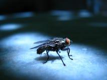 Μακρο βλαστός μυγών εντόμων Στοκ εικόνα με δικαίωμα ελεύθερης χρήσης