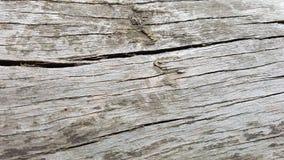 Μακρο γκρίζο ξύλινο υπόβαθρο σύστασης Στοκ Εικόνα