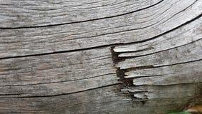Μακρο γκρίζο ξύλινο υπόβαθρο σύστασης Στοκ εικόνες με δικαίωμα ελεύθερης χρήσης