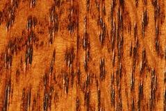 μακρο δρύινο δάσος σιταριού Στοκ εικόνες με δικαίωμα ελεύθερης χρήσης