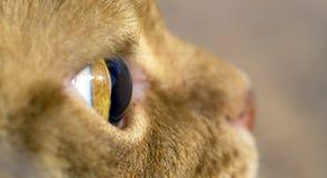 Μακρο εικόνα της πλάγιας όψης ματιών της γάτας Στοκ φωτογραφίες με δικαίωμα ελεύθερης χρήσης