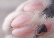 Μακρο εικόνα του ποδιού της γάτας με τα ρόδινα και μαύρα ψηφία στοκ εικόνες