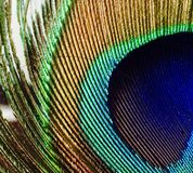 Μακρο εικόνα του φτερού peacock Στοκ φωτογραφία με δικαίωμα ελεύθερης χρήσης