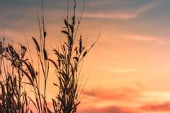 Μακρο εικόνα των άγριων χλοών, μικρό βάθος του τομέα Εκλεκτής ποιότητας επίδραση Όμορφες αγροτικές άγριες χλόες φύσης στο χρυσό θ στοκ εικόνες με δικαίωμα ελεύθερης χρήσης