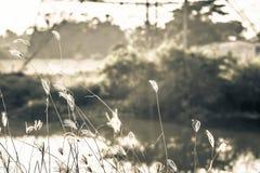 Μακρο εικόνα των άγριων χλοών, μικρό βάθος του τομέα Εκλεκτής ποιότητας επίδραση Όμορφες αγροτικές άγριες χλόες φύσης στο χρυσό θ στοκ φωτογραφίες