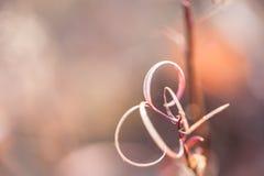 Μακρο εικόνα των άγριων χλοών Στοκ Φωτογραφία