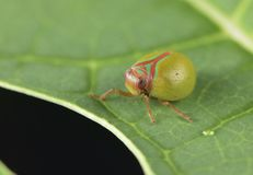 Μακρο εντόμων ladybug υπόβαθρο ταπετσαριών λεπτομέρειας στενό επάνω στοκ εικόνες