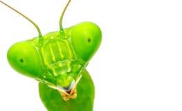 Μακρο επικεφαλής πυροβοληθείσα γιγαντιαία ασιατική επίκληση Mantis Στοκ Εικόνες