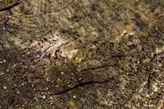 Μακρο λεπτομέρεια των οστρακόδερμων στο ξύλινο υπόβαθρο τέλειο για το σχέδιο, ιστοχώρος, Στοκ φωτογραφία με δικαίωμα ελεύθερης χρήσης