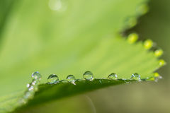 Μακρο λεπτομέρειες της δροσιάς νερού σε ένα πράσινο φύλλο Στοκ εικόνες με δικαίωμα ελεύθερης χρήσης
