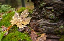 Μακρο λεπτομέρειες φθινοπώρου Στοκ Φωτογραφίες