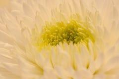 1 μακρο λευκό αστέρων Στοκ φωτογραφία με δικαίωμα ελεύθερης χρήσης