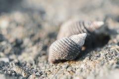 Μακρο θαλασσινό κοχύλι στη φύση Στοκ Εικόνες