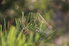 Μακρο ιστός αράχνης στην πράσινη χλόη στοκ φωτογραφία με δικαίωμα ελεύθερης χρήσης