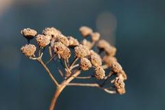 μακρο κλαδίσκος φυτών Στοκ Εικόνα