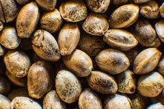 Μακρο λεπτομέρεια του σπόρου μαριχουάνα Οργανικός σπόρος κάνναβης Τοπ όψη Υπόβαθρο σπόρων κάνναβης στη μακροεντολή Πολλοί σπόροι  στοκ φωτογραφία