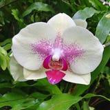 Μακρο λουλούδι στοκ φωτογραφίες
