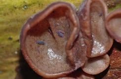 Μακρο μύκητας στο δέντρο με τα έντομα στοκ εικόνα