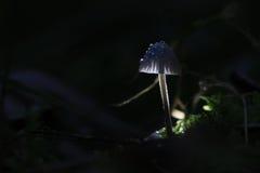 Μακρο μύκητας Στοκ φωτογραφία με δικαίωμα ελεύθερης χρήσης