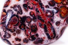 Μακρο ορυκτή λεοπάρδαλη ιασπίδων πετρών στο άσπρο υπόβαθρο στοκ φωτογραφία με δικαίωμα ελεύθερης χρήσης