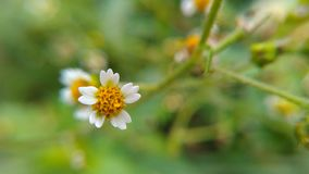 Μακρο λουλούδι χλόης Στοκ φωτογραφία με δικαίωμα ελεύθερης χρήσης