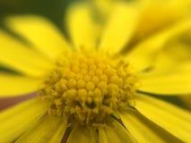 Μακρο λουλούδι Στοκ εικόνες με δικαίωμα ελεύθερης χρήσης