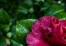 Μακρο λουλούδι Στοκ φωτογραφία με δικαίωμα ελεύθερης χρήσης