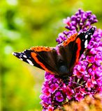 Μακρο πεταλούδα σε ένα λουλούδι στοκ φωτογραφία με δικαίωμα ελεύθερης χρήσης