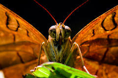 Μακρο πεταλούδα στοκ φωτογραφίες